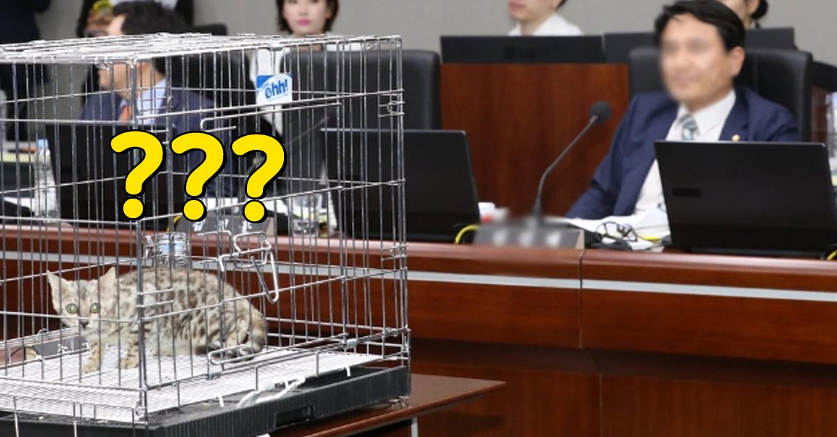 국회의원이 국정감사에 '벵갈 고양이' 데려온 이유 (ft. 대전 오월드 퓨마사건)
