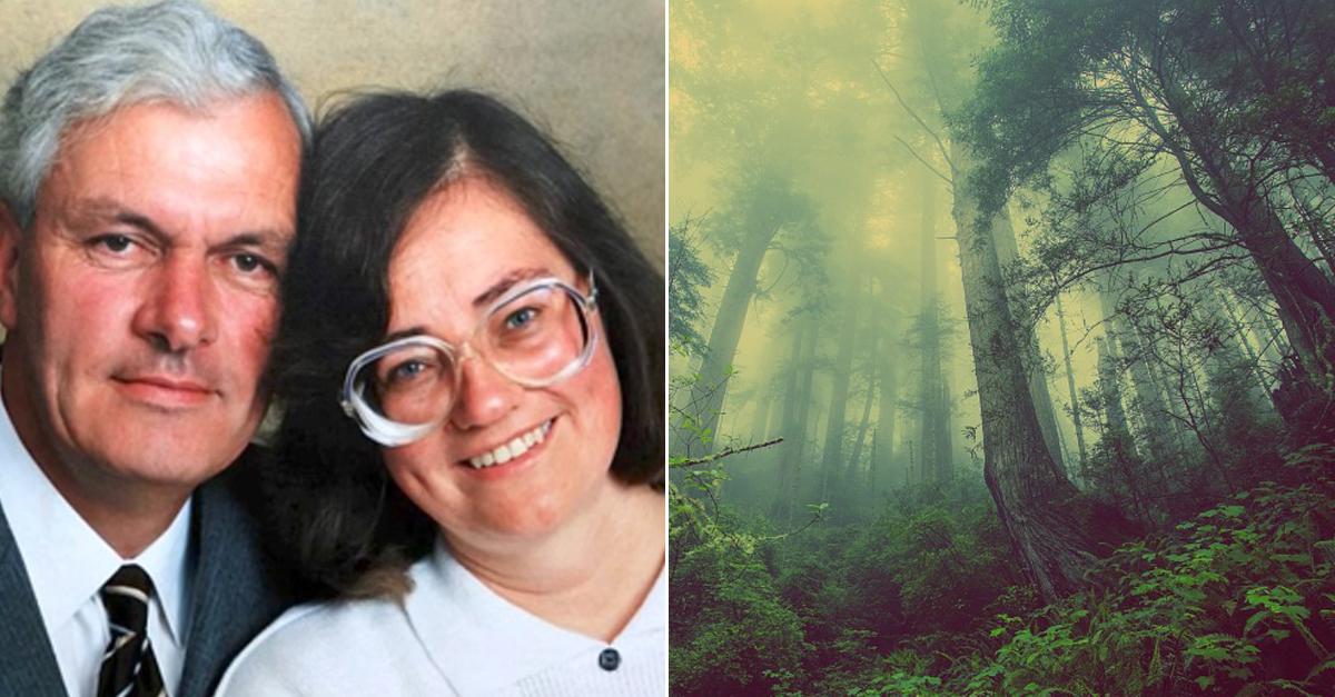 '6,000개' 나무를 심었던 남성, 17년 후 숲속에서 발견된 것