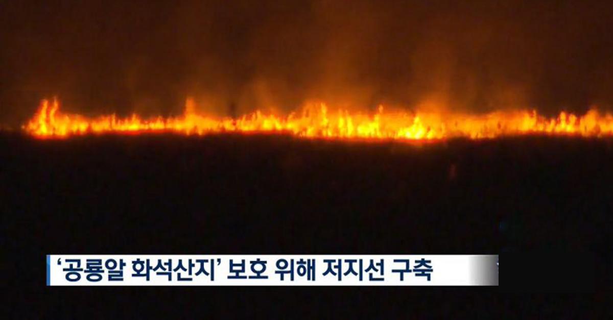 '특수효과'내려고 연막탄 터트렸다가 '천연기념물 갈대숲'다 태운 사진작가 ㄷㄷ