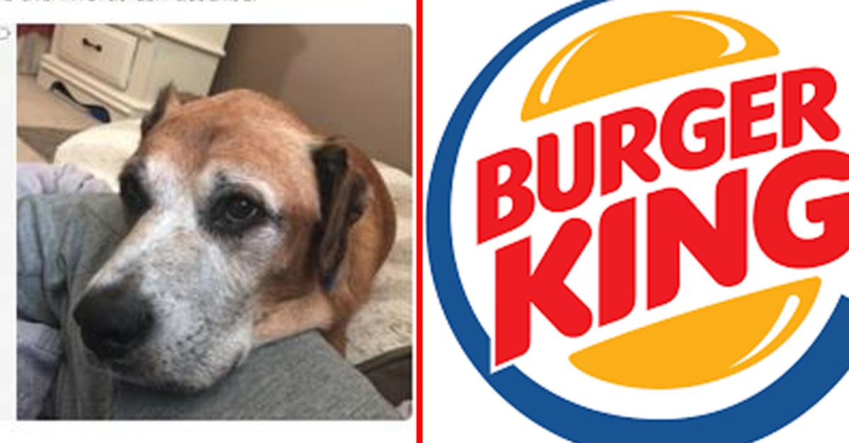햄버거 좋아하던 강아지가 시-한부 판정받자 '버거킹'이 한 행동