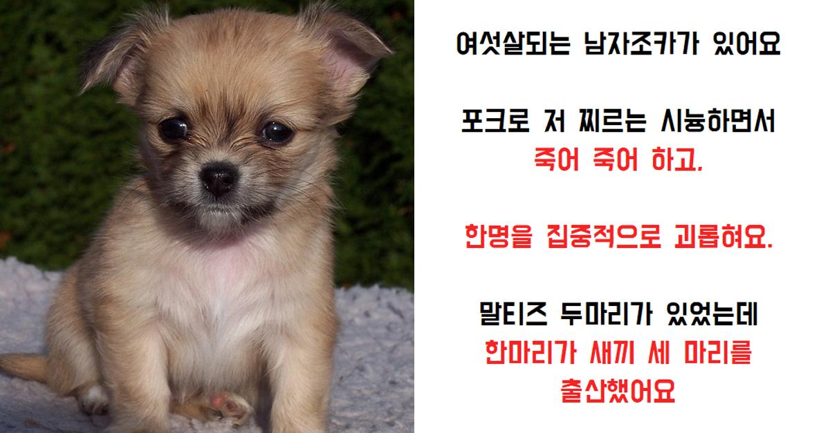 오늘의 썰) 6살 조카가 강아지를 죽-였어요…싸이코같아요(+후기)