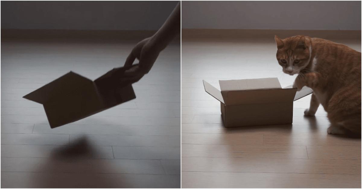 고양이는 얼마나 작은 박스까지 들어갈 수 있을까.GIF