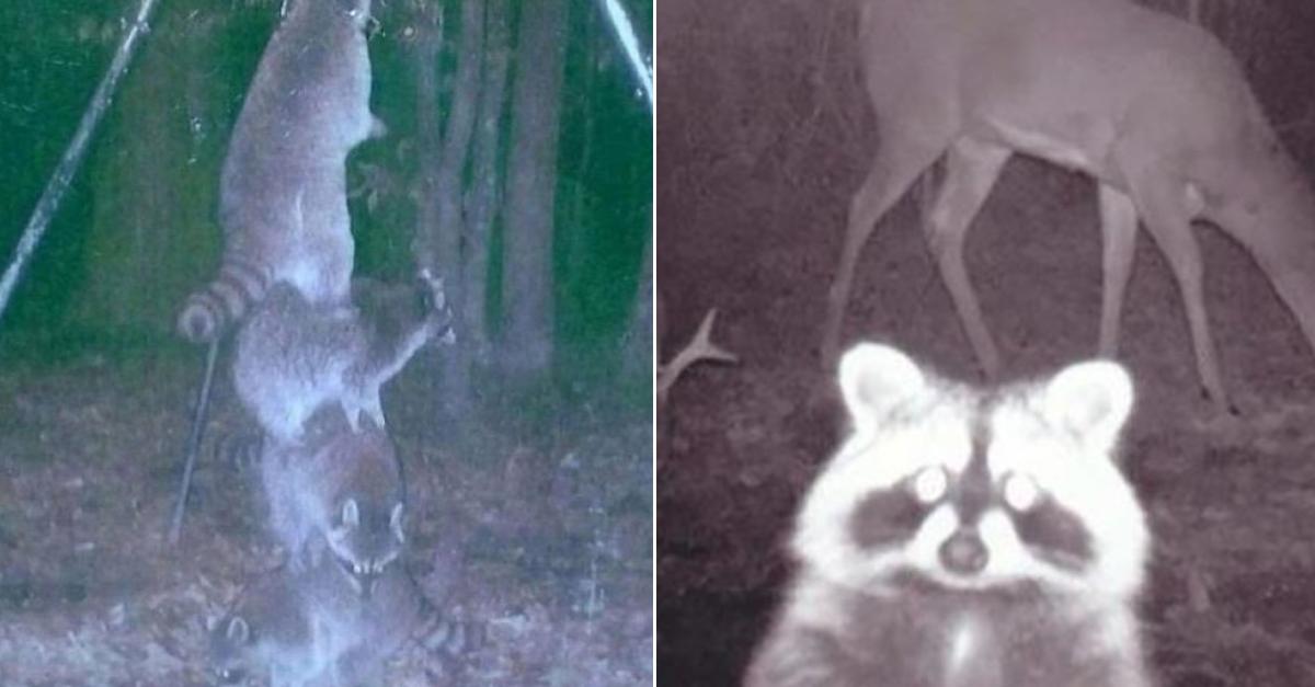 카메라를 숲속에 설치해뒀더니 찍힌 사진