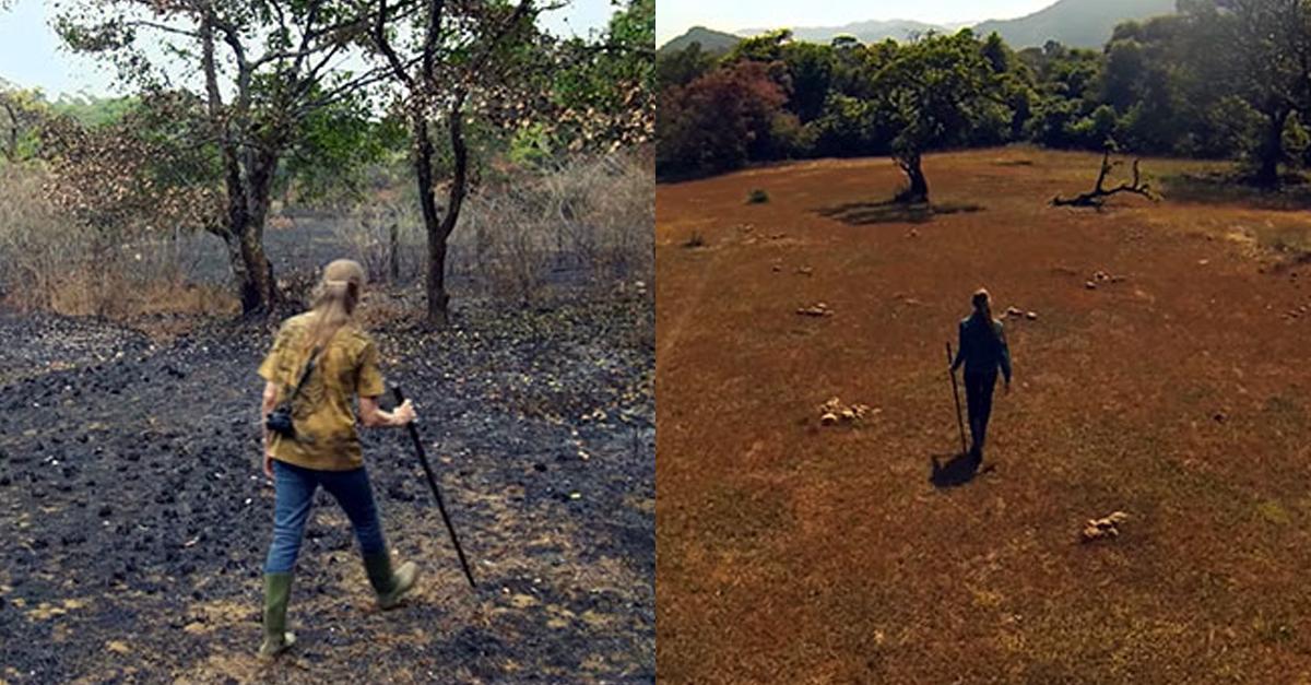26년 동안 버려진 땅에 나무를 심어봤더니….