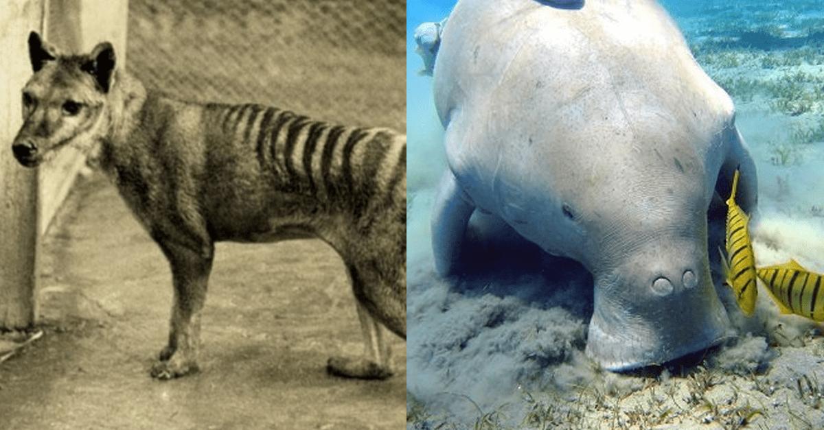 오로지 '인간'에 의해 멸종당했던 동물들.JPG