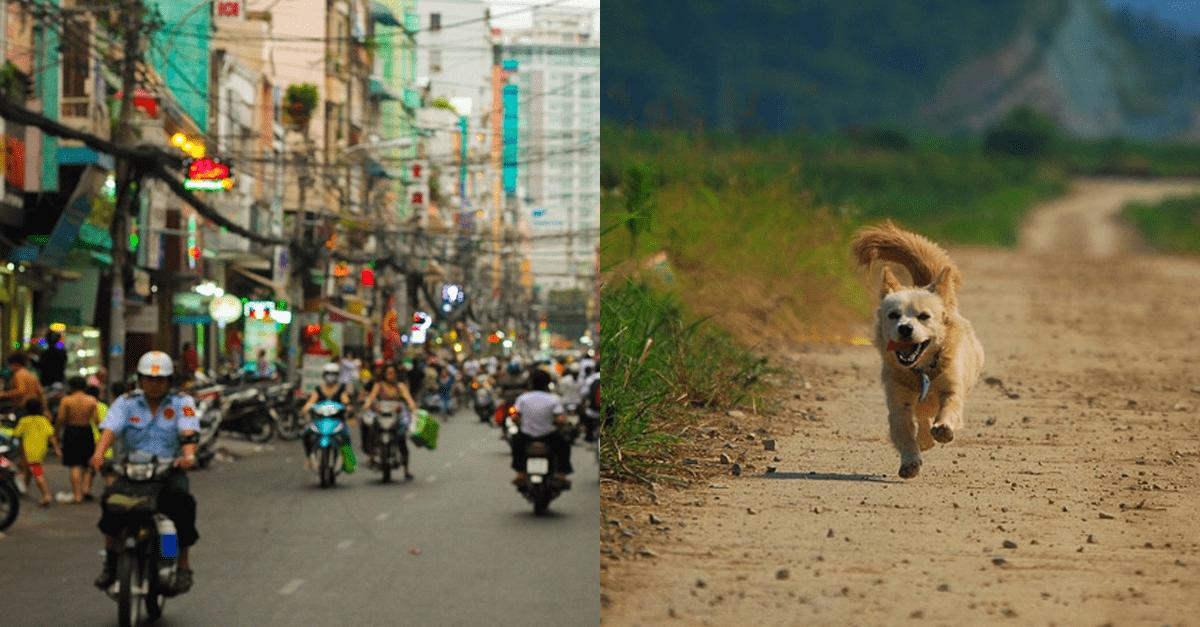 태국 길거리에 있는 '강아지' 만지면 큰일나는 이유..