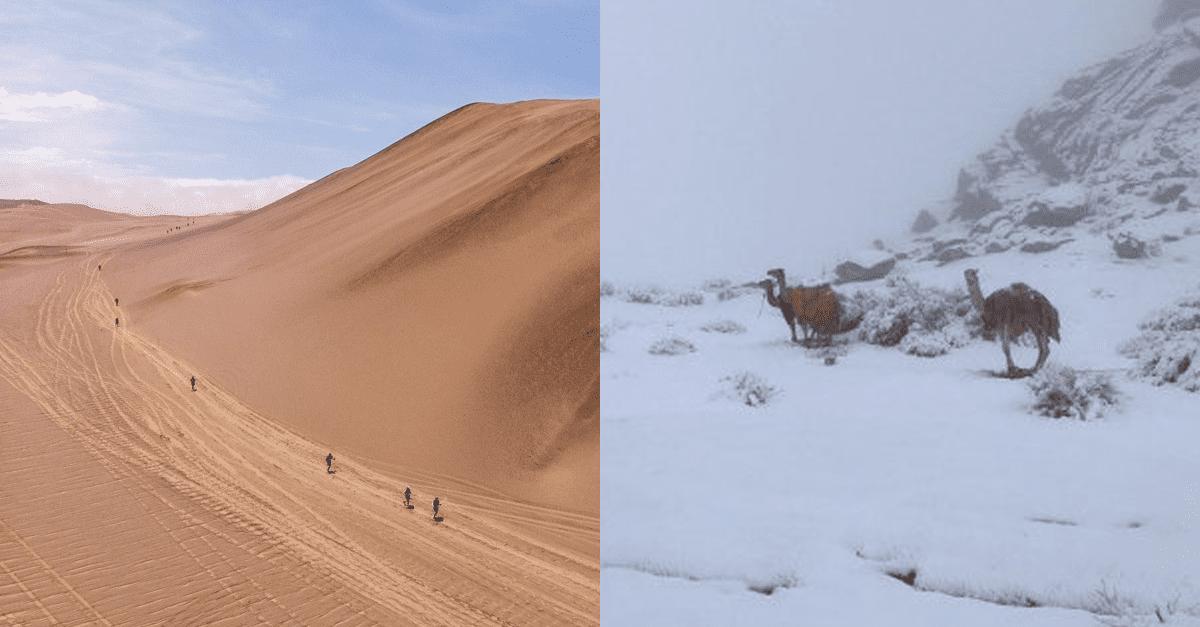 사우디 사막에 갑자기 폭설이 내리자 '낙타' 반응