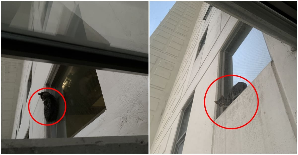 21층 창문 위에 있어 오도가도 못하던 고양이 근황..