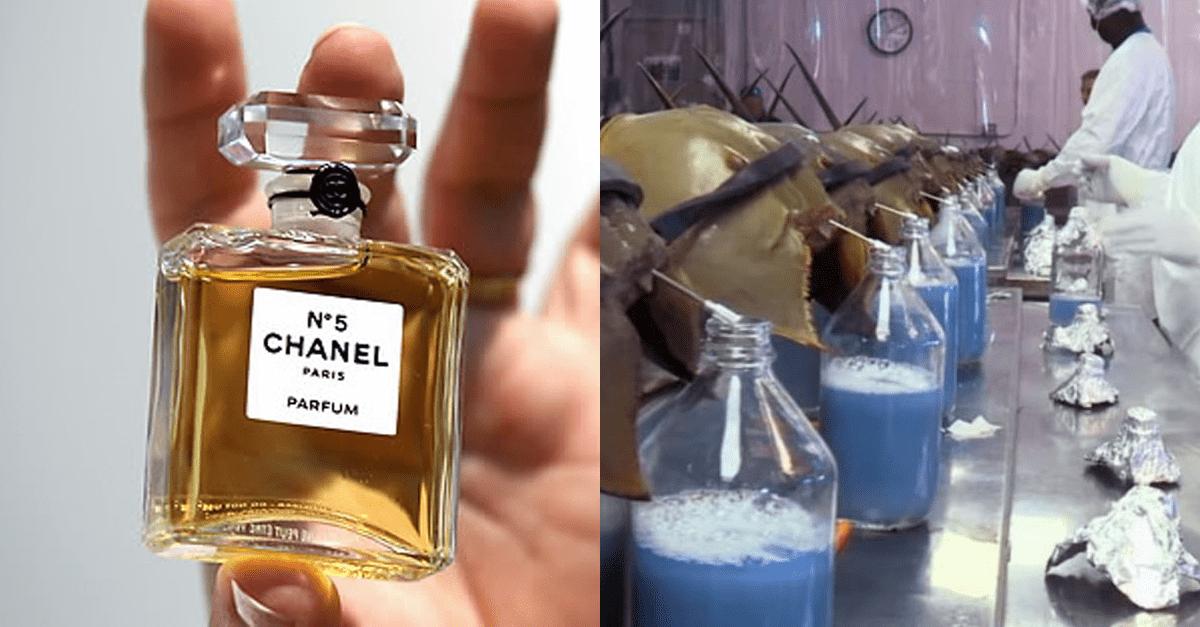 지구에서 가장 비싸다고 알려진 액체 7가지
