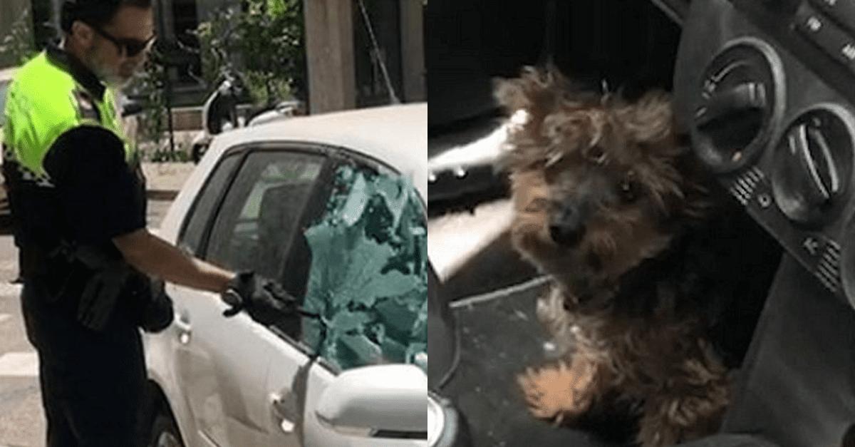 경찰이 강아지 구하기 위해 자동차 유리창 깼더니..