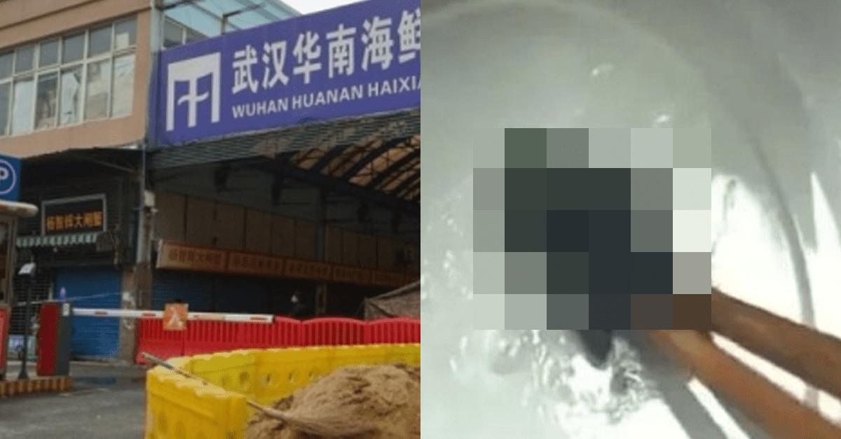 중국 식당 음식에서 발견된 박쥐사체..