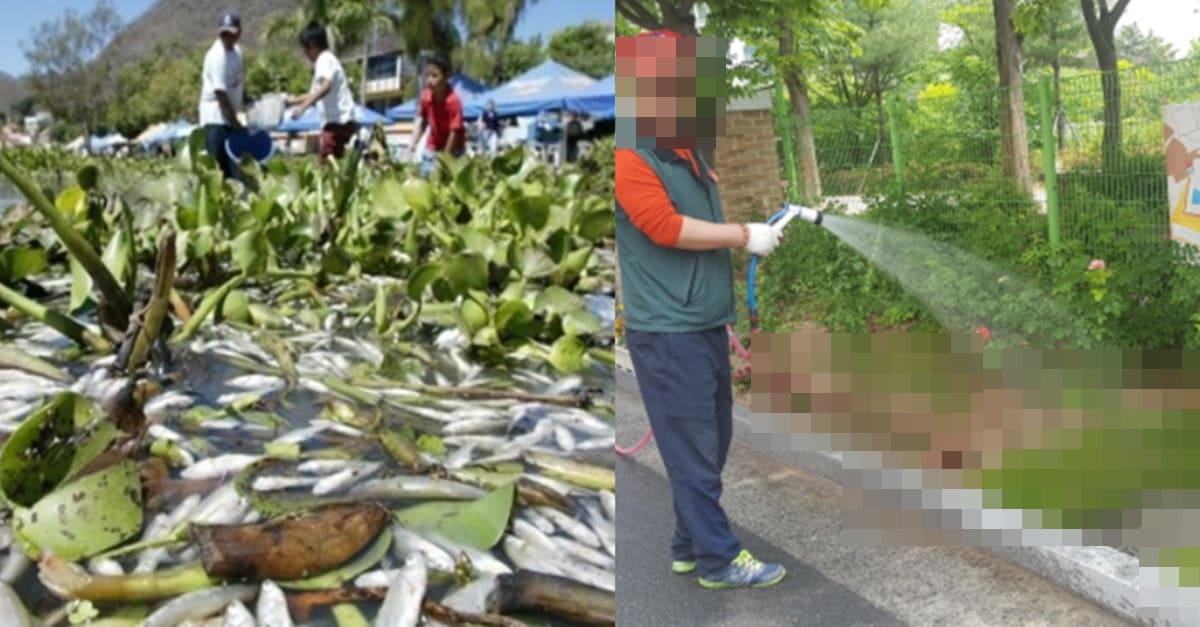 세계에서 '악마의 잡초'라고 불리는데 한국에서만 유용한 식물