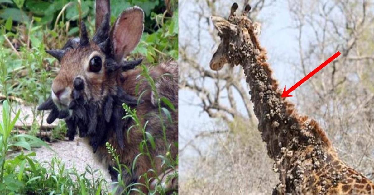 실시간 전세계 동물 나무로 변하게 하는 바이러스 발생 중