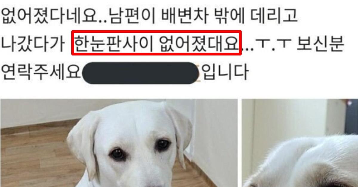 SNS 뒤집었던 당근마켓 '실종된 강아지' 현재 충격적인 근황